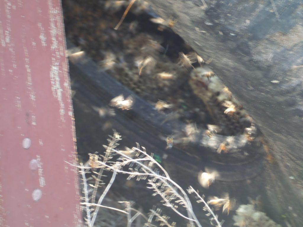 bees-in-tire-2