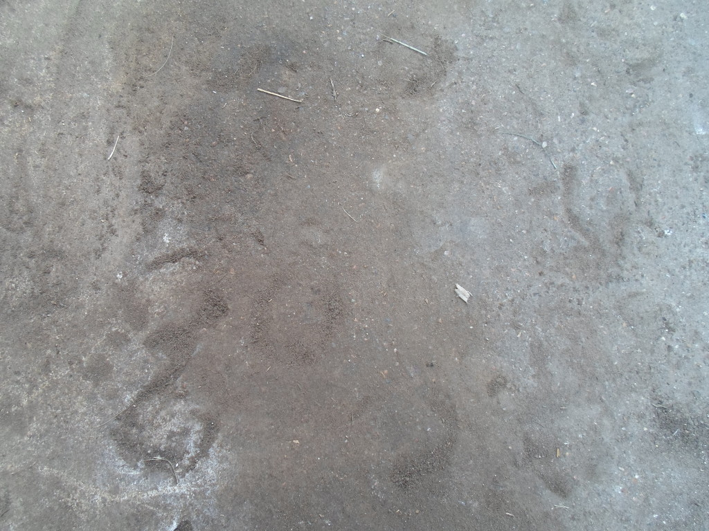 Cow hoof prints in cement.  One of the last remaining artifacts from the old Van Berg dairy farm.